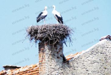 Петричкото с. Кулата №2 по  щъркелови гнезда в България