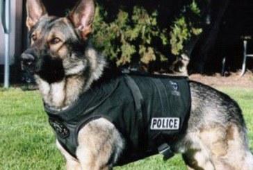 Полиция гони с кучета каналджии в гора край радомирско село