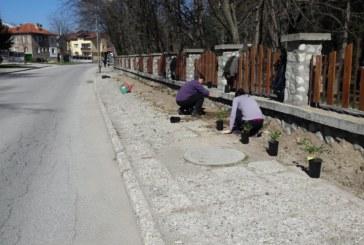 Започнаха дейностите по пролетното зацветяване в община Банско
