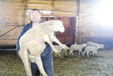 Животновъди от Разложко: Късният Великден и евтиният внос убиват пазара на агнешкото