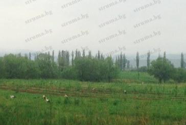 """Ята щъркели """"окупираха"""" поляните край пътя Кюстендил-София, прогонени от студа"""