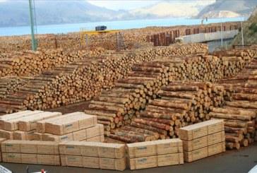 Албанци съживяват търговията с дървен материал в Кюстендилско