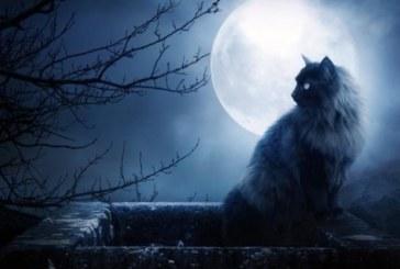 СУЕВЕРНИТЕ В ШОК! Нумероложка: Удря ни най-мощният петък 13-и, чака ни силна разплата заради могъща черна магия