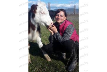 Мандрите в Югозапада спряха изкупуването на мляко, животновъдите от Гоце Делчев до Доспат в паника, искат намеса на правителството