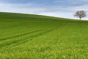 Вижте колко струва земеделската земя в Благоевград