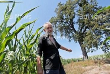Дърво на проклятието расте в България, никой не смее да го доближи, вижте къде е