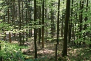 Частни собственици с голям интерес към възможността да продадат горите си на държавата