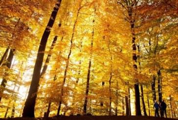 Лято за почивните дни, от 4 октомври – есен и дъжд