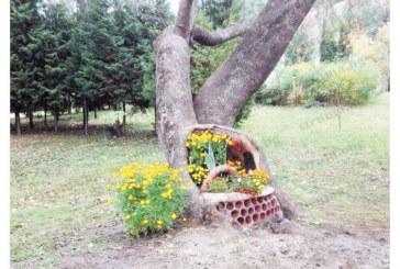 Дънер на 103-г. дърво, донесено от  ген. Тодоров от Италия, стана  Стол на влюбените в Сандански