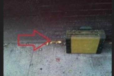Някой захвърлил стар куфар пред нейната врата! Отвътре се чували звуци, когато жената го отворила… О, Боже мой!
