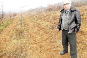 Кражби в Петричкото поле! Вандали отмъкнаха 200 дървени кола от масива на К. Попов, потрошиха лозичките, 250 колчета от домати изчезнаха от градината на Ив. Марков
