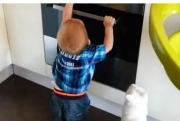 Дете се приближи опасно до включена фурна! Последва реакция на домашната котка…