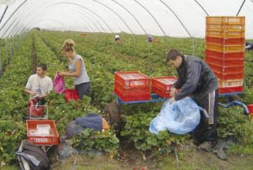 Испания търси българки за бране на ягоди с условието да са млади, здрави, готови на тежък физически труд