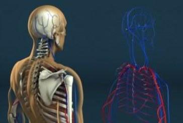 Странни факти за човешкото тяло