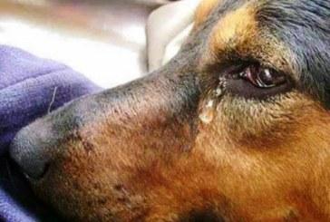 РАЗТЪРСВАЩА ИСТОРИЯ! Когато го гушнах, той заплака, никога не бях виждал толкова големи и чисти сълзи