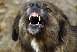 ШОК! Домашно куче нахапа жестоко стопанката си, тя го…
