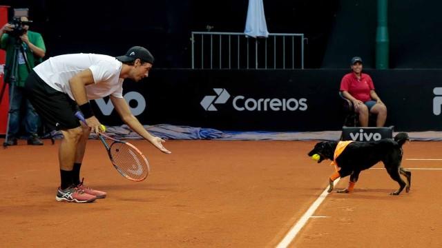 Кучета ще гонят топките на тенис турнира в Сао Пауло /ВИДЕО/