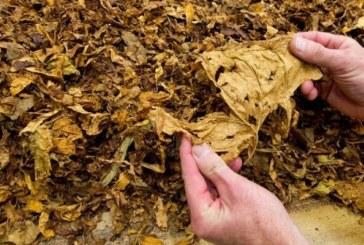 Тютюнопроизводители от Гоцеделчевско излизат на протест