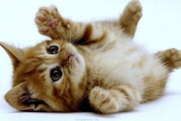 Разбиха един от най-популярните митове за котките
