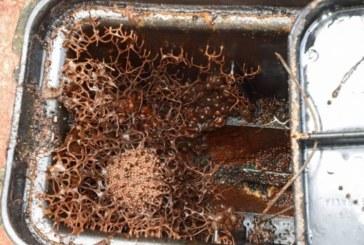Семейство просто искаше да провери водомера си, но откри това ужасяващо нещо (СНИМКИ/ВИДЕО)