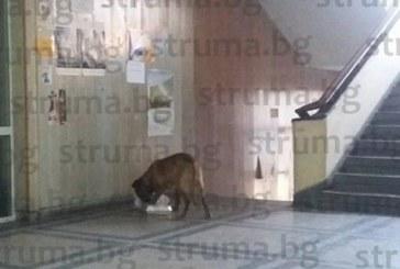 Бездомно куче обикаля партера на пернишката болница