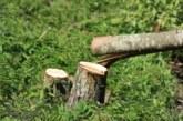"""Заради строителството на АМ """"Струма"""" започна сеч на горски теротирии в землището на Мощанец"""