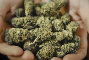 Баба от Петрич на съд за марихуана на тавана