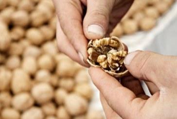 Мъже, похапвайте орехи, особено ако искате да ставате бащи