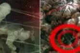 ТРАГЕДИЯ! Българка загина при снежна буря в Хималаите