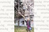 Вижте кой се снима пред цъфнала магнолия в Сандански