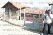 Церовката Г. Алексиева:  Заразата ку-треска е тръгнала от съседа, кошарата му е срещу къщата ни, 4-г. ми внуче е в болница…