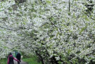 Пролетта се завръща с пълна сила! Ето до колко ще се вдигнат градусите във вторник