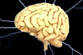 Колко дълго живее мозъкът след смъртта на тялото ни
