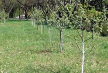 Агроспециалист от Кюстендил съветва: Овощарите да струпват горива край дърветата с готовност да реагират на рязко застудяване
