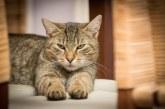 Котка стана герой, спаси семейство от отровен газ