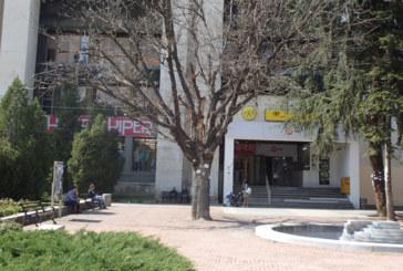 Благоевградски творци с арт идеи да превърнат изсъхналия явор пред пощата в градска атракция