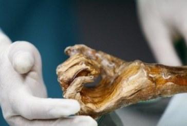 Зловещо! Намериха мумия на жена, престояла половин година в апартамент