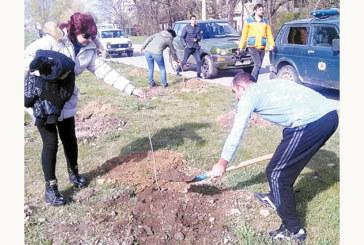 30 ентусиасти за 2 ч. засадиха над 100 люляка и кестени в Кюстендил