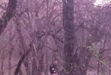 Намерили къде и кога! Непукисти правят секс посред бял ден в Западен парк