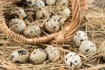 Пъдпъдъчите яйца намаляват кръвното налягане и прочистват тялото
