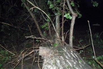 ТЕЖЪК ИНЦИДЕНТ! Мощната буря край Благоевград събори топола на Е-79, има ранен, пътят затворен