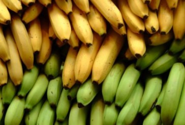 Жена намери в банан нещо ужасяващо, а семейството й незабавно напусна дома си, за да оживее