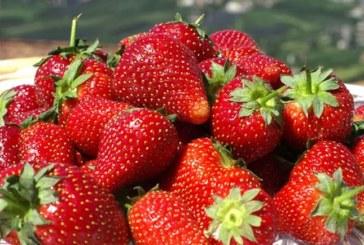 Тя решава здравословните ни проблеми! Вижте защо ягодата е най-полезният плод