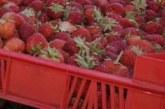 ТОТАЛНО БЕЗУМИЕ! Био ягоди удариха 105 лева килото