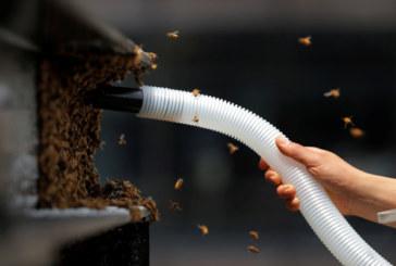 """Десетки хиляди пчели нападнаха """"Таймс скуеър"""""""