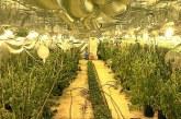 Откриха оранжерия за канабис в местността Ръждак