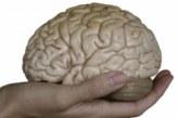 Гладът спасява мозъка от стареене