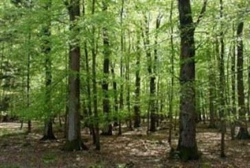 4 фирми спечелиха правото да секат общински гори в Лешко, Габрово, Лисия и Логодаж