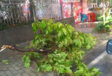 НЕВИЖДАНА БУРЯ В ПИРИНСКО! Ураганен вятър и градушка удариха Гоце Делчев