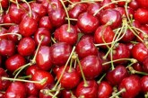 """СЛУЖБА """"ЗЕМЕДЕЛИЕ"""" ОБЯВИ! Антирекорд! Едва 2 хил. тона череши отчетоха собственици от 16193 дка градини в Кюстендилско"""